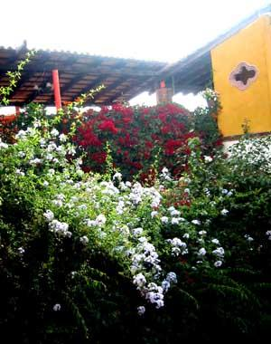 The main courtyard of Villa Scorpio B&B is packed with flowers!